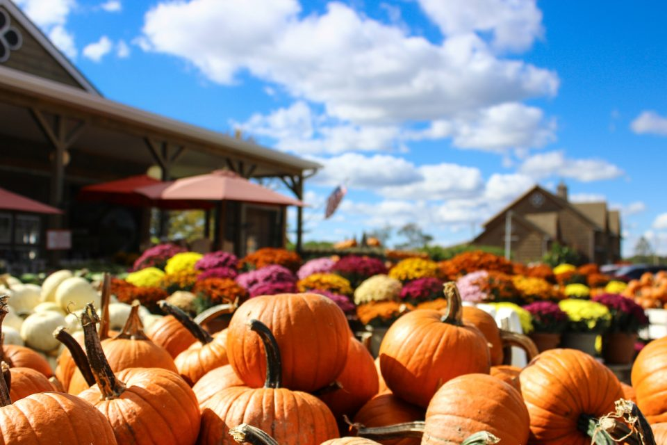 Ardmore Pumpkin Patch