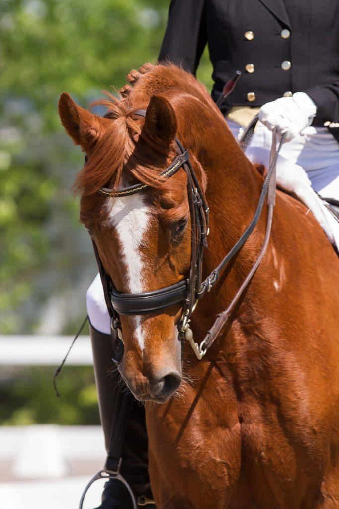 SRCHA Horse Show